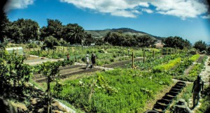 Historical City Farm Tour