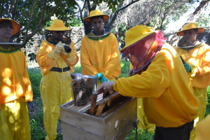 Urban Bee-keeping Tour
